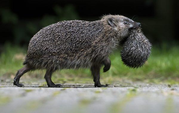 Other Mammals